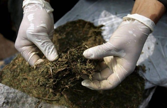 legalizacija marihuane u crnoj gori