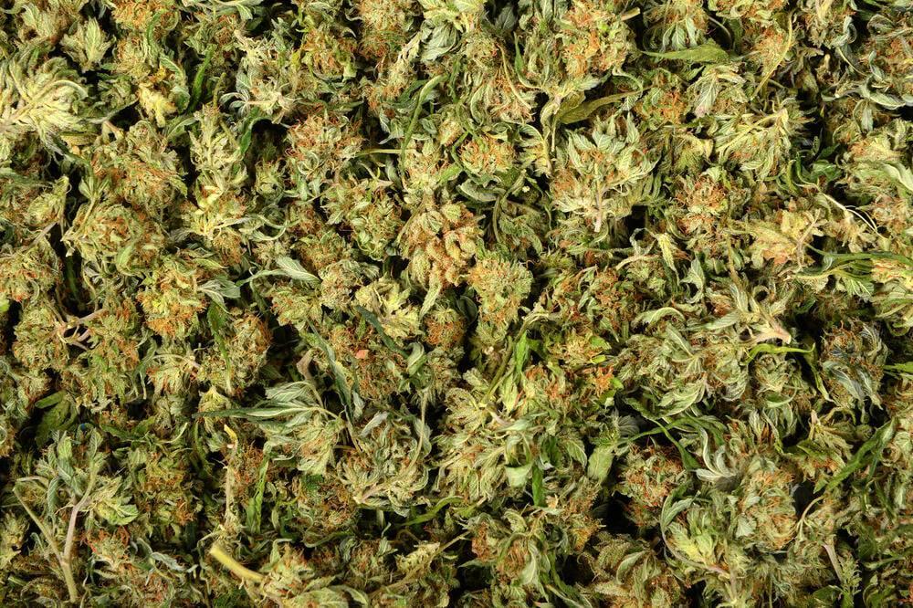 oduzeto preko pola tone narkotika