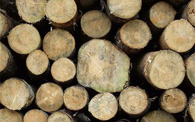 drvni sortimenati, Vlada, izvoz