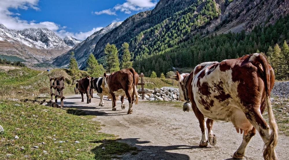 Unija stočara sjevera i proizvođača mlijeka, država, pomoć